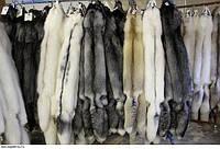 Fur переводится как  мех, шерсть, пушнина, налет, меховой, пушной, отделывать мехом