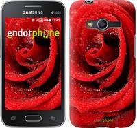 "Чехол на Samsung Galaxy Ace 4 Lite G313h Красная роза ""529u-208"""