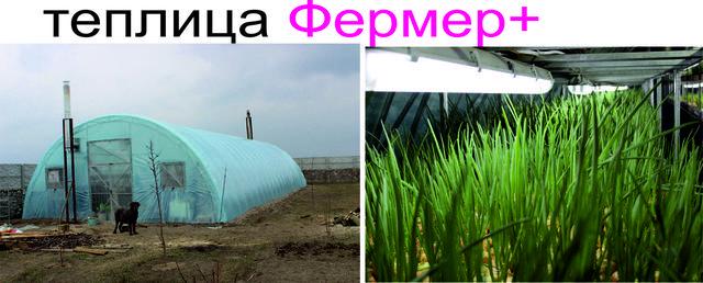 теплица фермерская для бизнеса