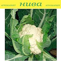 Авизо F1 семена капусты цветной средне-ранней Clause 1 000 семян