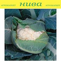 Наутилус F1 семена капусты цветной Clause 2 500 семян