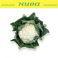 Стабилис F1 (Stabilis F1) семена капусты цветной Rijk Zwaan 1 000 семян