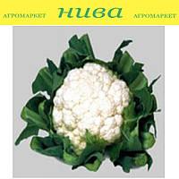 Уайт Эксел F1 семена капусты цветной Sakata 1 000 семян
