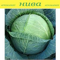 Новатор F1 семена капусты белокачанной поздней Syngenta 2 500 семян