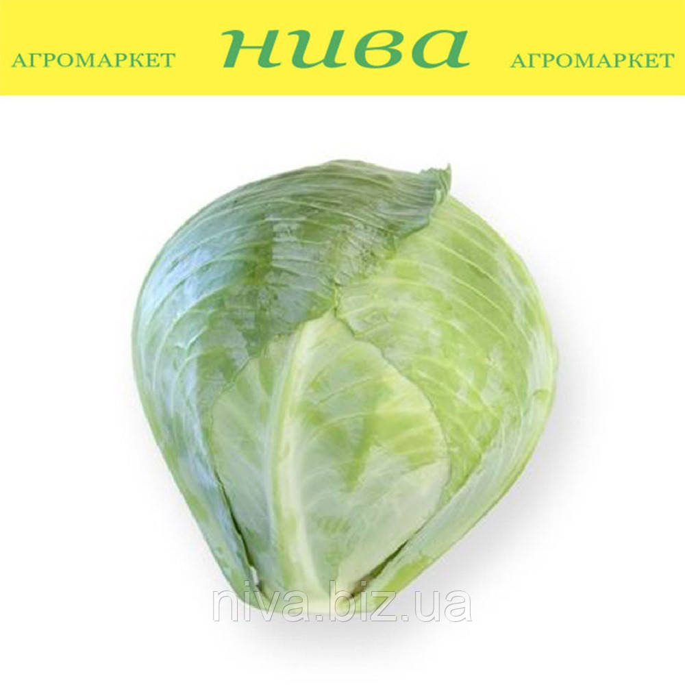 Сторема F1 (Storema F1) семена капусты белокачанной поздней калибр Rijk Zwaan 2 500 семян