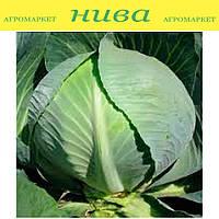 Структон F1 семена капусты белокачанной поздней Hazera 2 500 семян