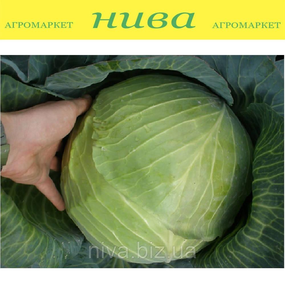 Портоза F1 семена капусты белокачанной среднепоздней Semo 2 500 семян