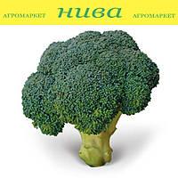 КС (KS) 355 F1 семена капусты брокколи Kitano Seeds 2 500 семян