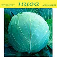 КС (KS) 29 F1 семена капусты средней Kitano Seeds 2 500 семян