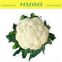 Ванза (КС 35) F1 насіння капусти кольорової Kitano Seeds 2 500 насінин