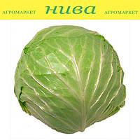 Рейма F1 (Rayma F1) семена капусты белокачанной ранней калибр. Rijk Zwaan 500 семян