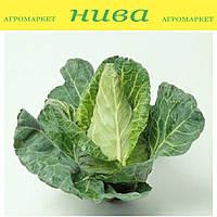 Редженси семена капусты белокочанной конической ранней Hazera 500 семян