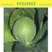 Престиж F1 семена капусты поздней Semenaoptom 1 000 семян