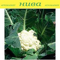 Лекану F1 семена капусты цветной ранней Syngenta 500 семян
