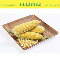 Карамело F1 насіння кукурудзи суперсолодкої May Seeds 500 г