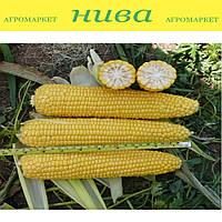 Добриня F1 насіння кукурудзи солодкої Lark Seeds 500 насінин