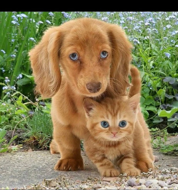 Консервированые корма для котов и собак