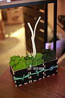 """Эко-сувениры ручной работы из стабилизированного мха """"Artis Green"""""""