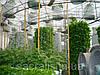 Аэропоника - сады для выращивания продуктов