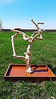 Присада для попугая из кофейного дерева (Ява)