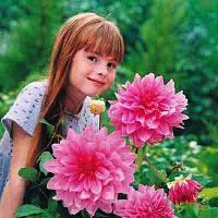 Георгина крупноцветковая  Rosella. клубень