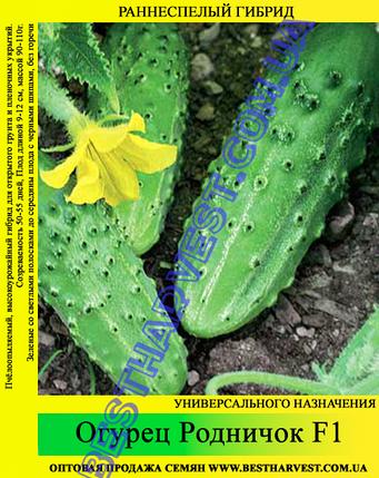 Семена огурца Родничок F1 0,5кг, фото 2