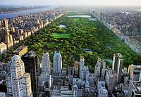 Фотообои в гостинную Центральный парк Нью-Йорк размер 366 х 254 см