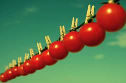 Плоди без насіння - міф чи реальність?