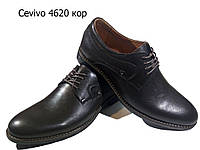 Туфли мужские классические  натуральная кожа коричневые на шнуровке (4620)