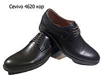 Туфли мужские классические  натуральная кожа коричневые на шнуровке (4620), фото 1