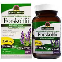 Natures Answer, Forskohlii, 250 мг, 60 шт., вегетарианские капсулы