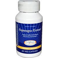 Enzymatic Therapy, Экстракт спаржи, 60 растительных капсул