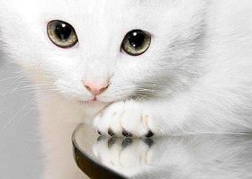 Домашние животные, Koшки