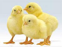 Электрический коврик-сушилка 50х25 (подогрев для цыплят, грунта, сушка для фруктов, грибов, ягод)
