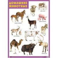 Плакат Домашние животные Мозаика-Синтез 978-5-43150-178-4