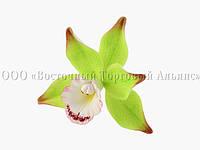 Цветы из мастики - Орхидея зеленая - Ø90 мм