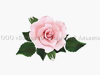 Букет из мастики - Роза с бутонами РОЗОВАЯ d-120