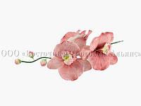 Букет из мастики - Веточка орхидей ТЕМНО-РОЗОВЫХ №11