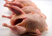 Мясо ПЕРЕПЕЛОВ. Цена 90 грн.