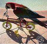 Parrot Велосипед - игрушки для попугая Montana Cages, фото 5