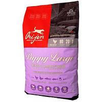 Orijen Puppy Large (Ориджен) сухой корм для щенков крупных пород 11.4
