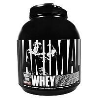 Universal Nutrition, Сывороточная пища для мышц Animal, шоколад, 4 фунта (1,81 кг)