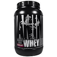 Universal Nutrition, Animal, сывороточный протеин для мышц, клубника, 2 фунта (907 г)