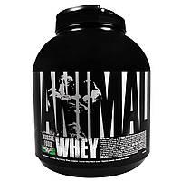 Universal Nutrition, Сыворотка Animal, питание для мышц, шоколад и мята, 4 фунта (1,81 кг)