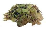Листья черники 100 грамм
