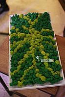 """Картина """"Солнце"""" ручной работы из стабилизированного мха """"Artis Green"""""""