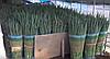 Семена лука Лонг Токио (на перо) Westar,1 кг семян