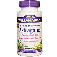 Oregons Wild Harvest, Астрагал, 90 капсул, не содержит ГМО, подходит для вегетарианцев