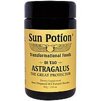 Sun Potion, Порошок Астрагал, Обработка в сыром виде, 2,8 унции (80 г)