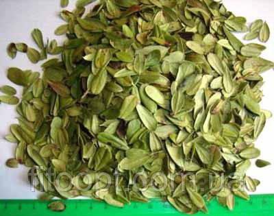 Брусника (лист и пагоны)  500 грамм
